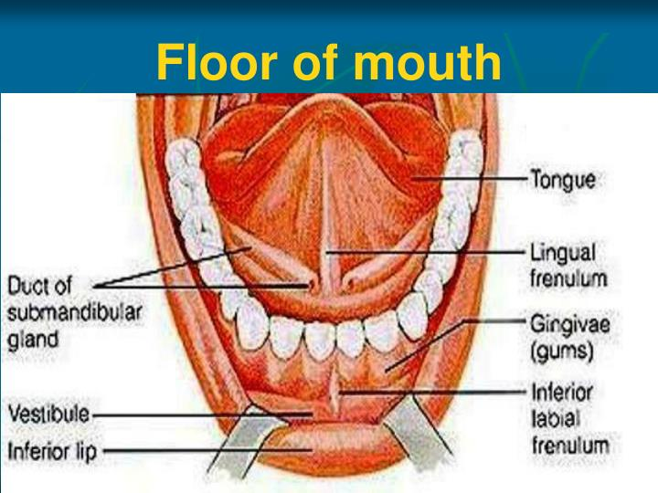 Ppt Anatomy Of Oral Cavity Pharynx Oesophagus Powerpoint