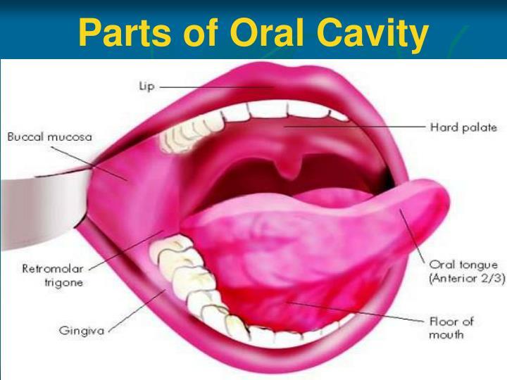 Ppt Anatomy Of Oral Cavity Pharynx Oesophagus Powerpoint
