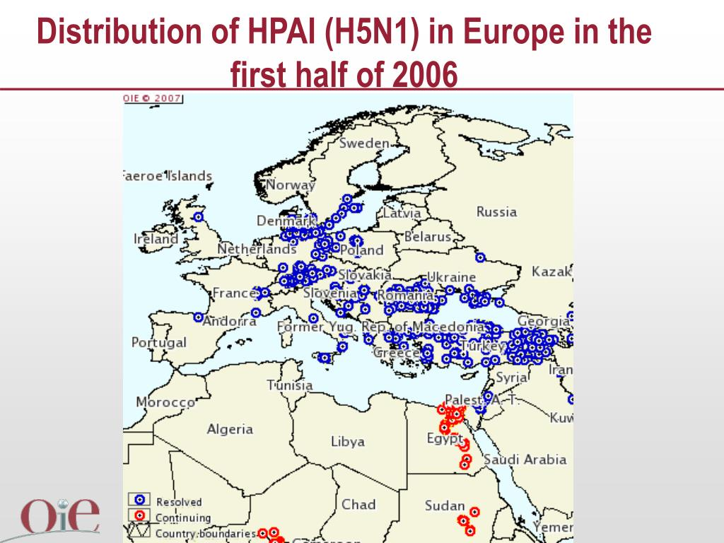 Distribution of HPAI (H5N1) in Europe in the first