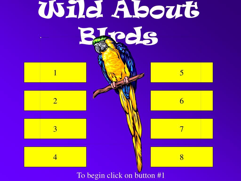 wild about birds l.