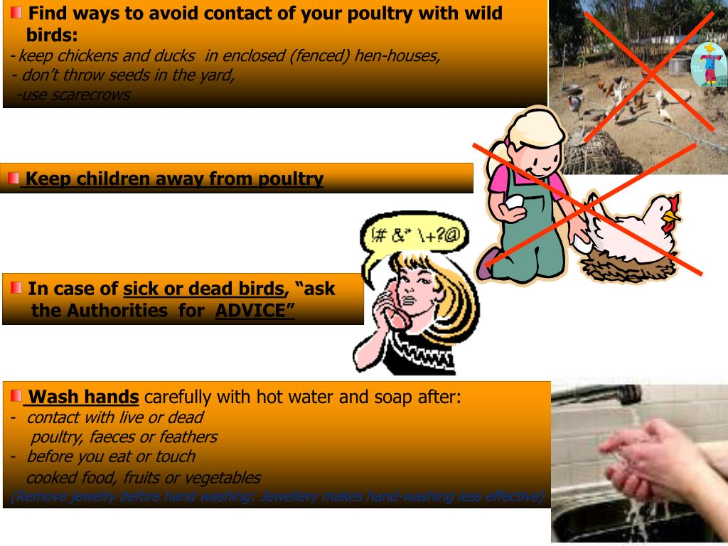 Find ways to avoid contact of your poultry with wild