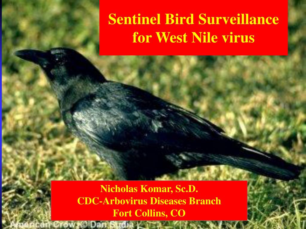 sentinel bird surveillance for west nile virus l.