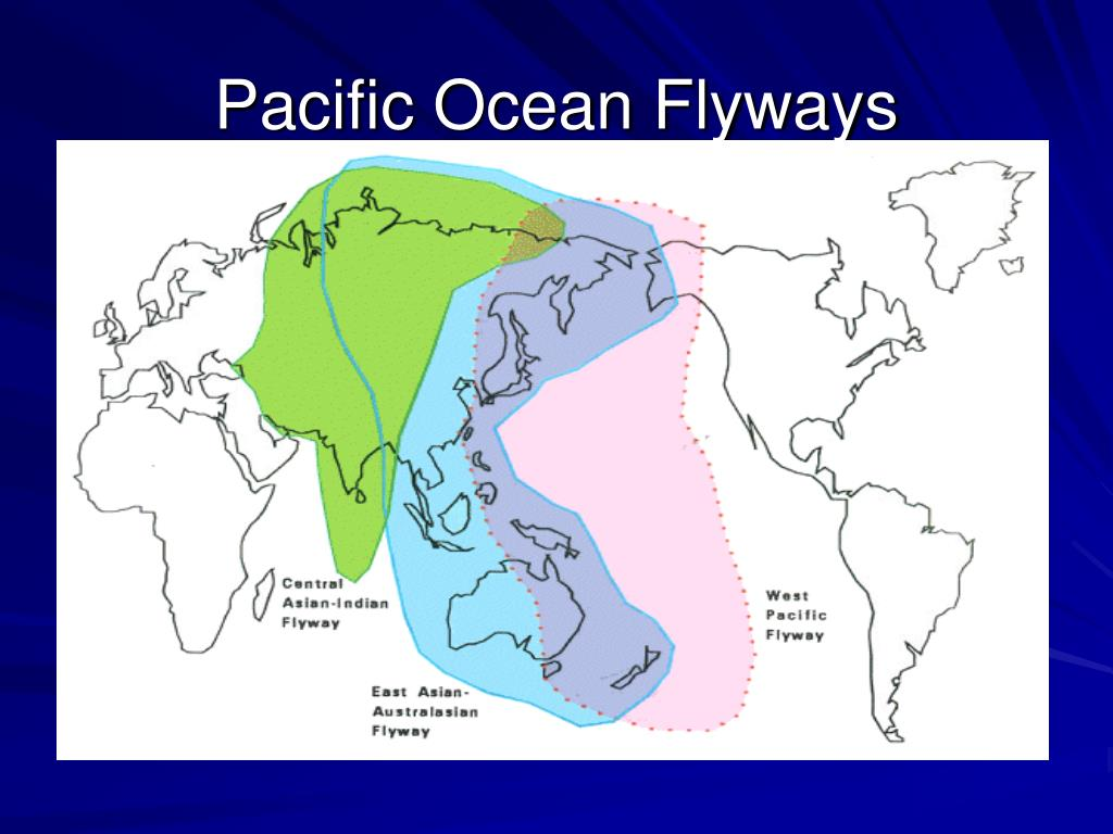 Pacific Ocean Flyways