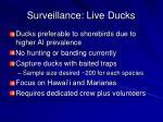 surveillance live ducks