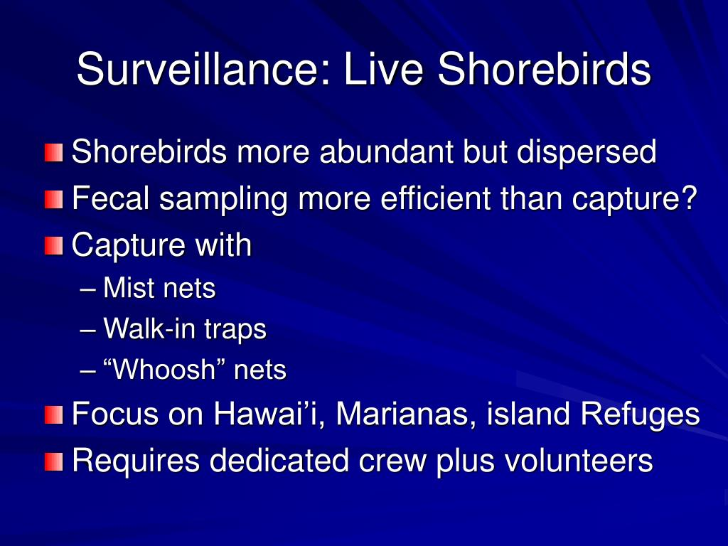 Surveillance: Live Shorebirds