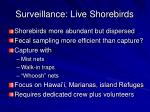 surveillance live shorebirds