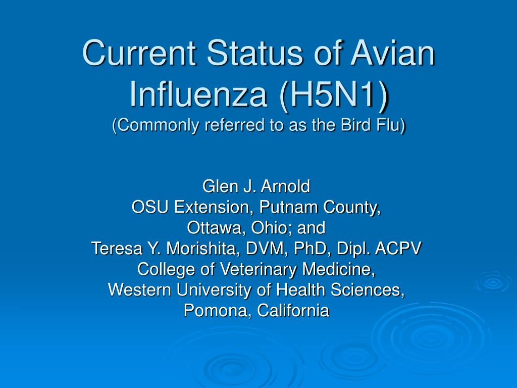 current status of avian influenza h5n1 commonly referred to as the bird flu l.