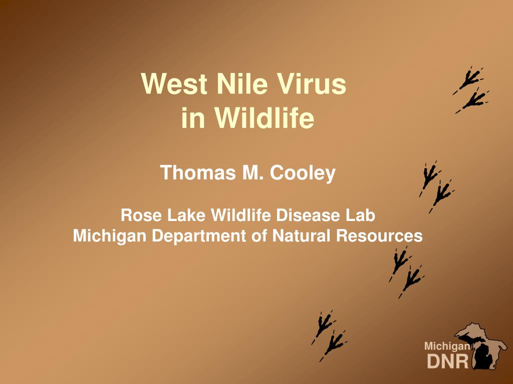 west nile virus in wildlife l.