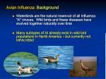 avian influenza background