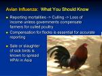 avian influenza what you should know
