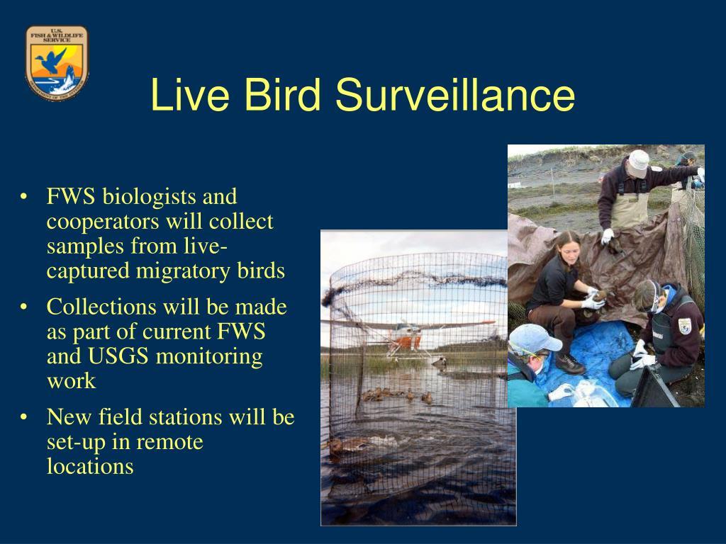 Live Bird Surveillance