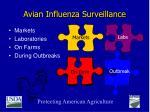 avian influenza surveillance