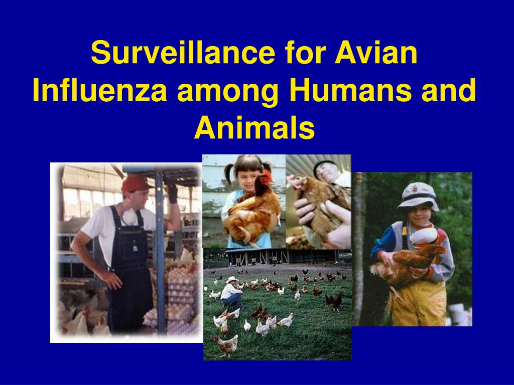 surveillance for avian influenza among humans and animals l.