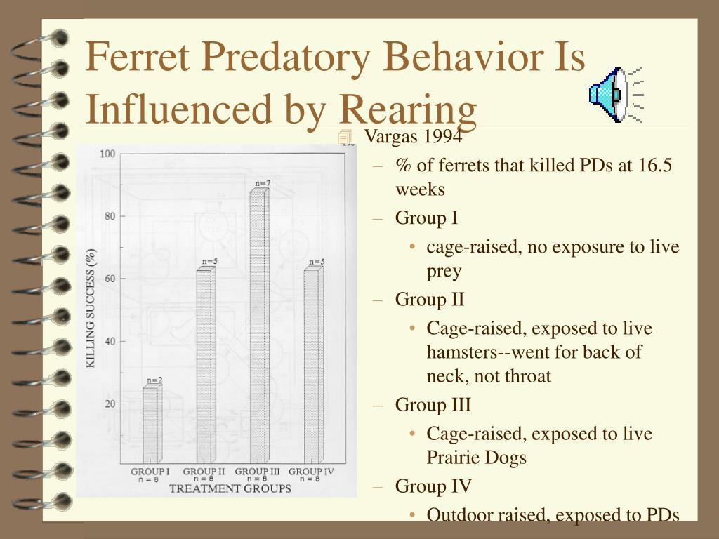 Ferret Predatory Behavior Is Influenced by Rearing