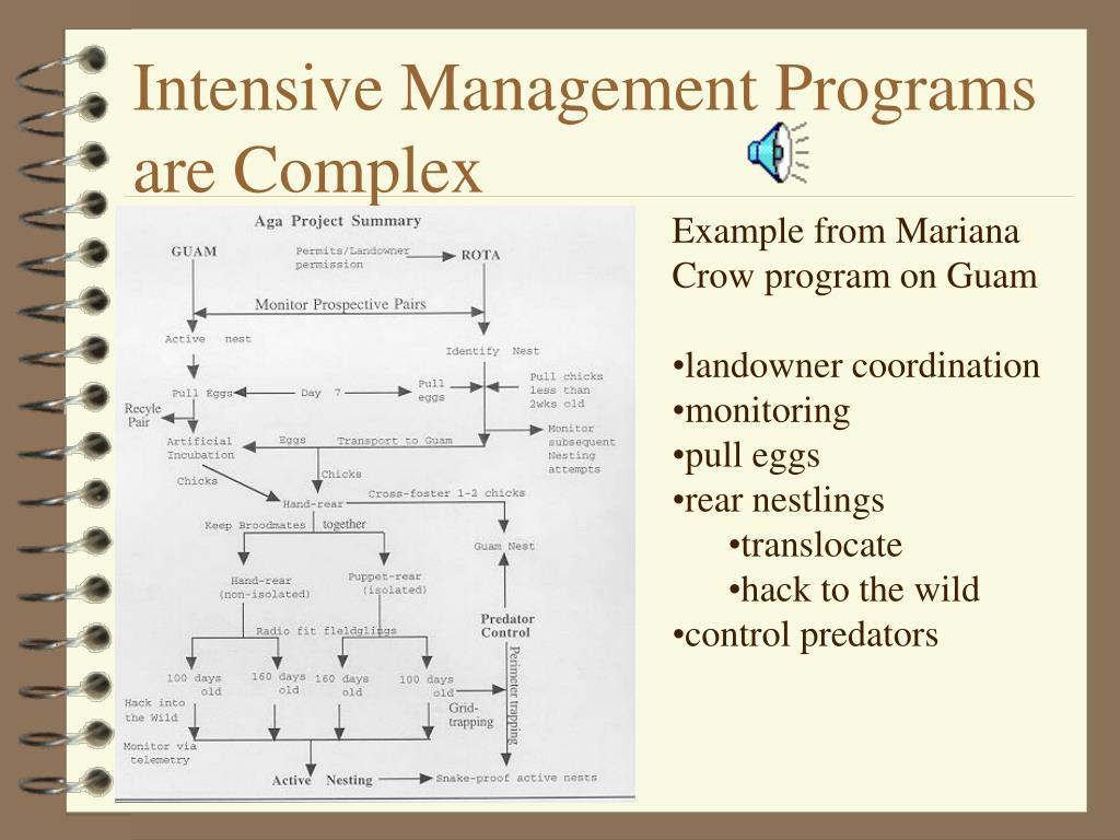 Intensive Management Programs are Complex