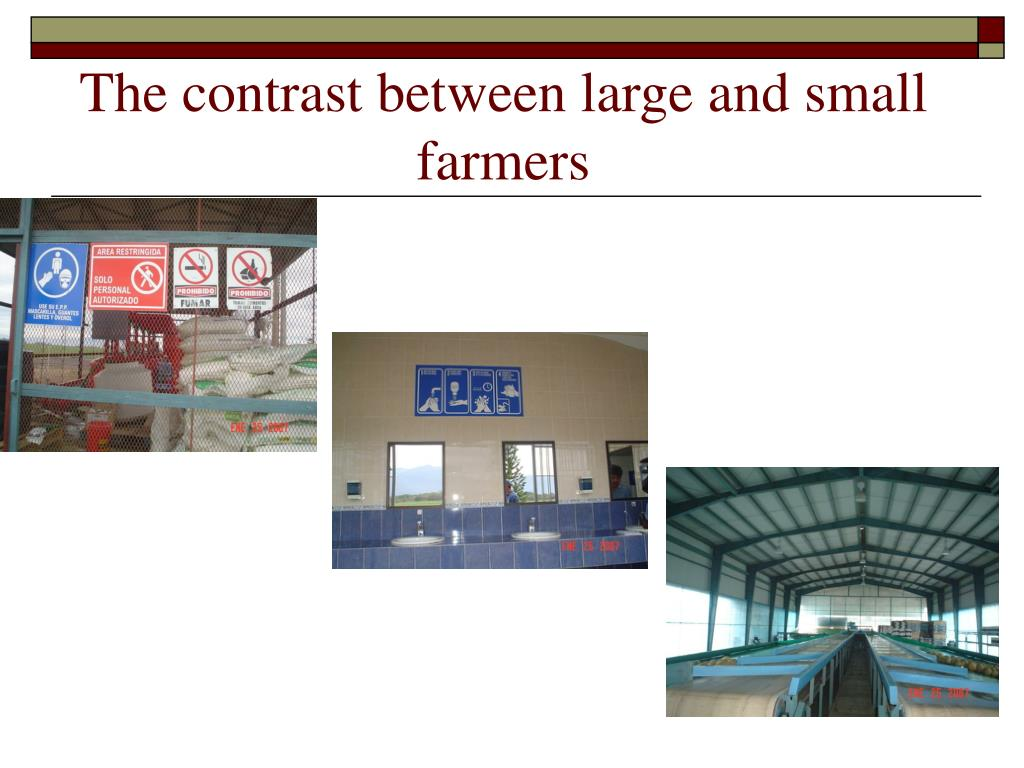 The contrast between large and small farmers