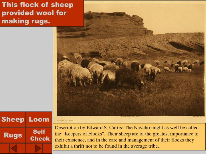 This flock of sheep provided wool for making rugs.
