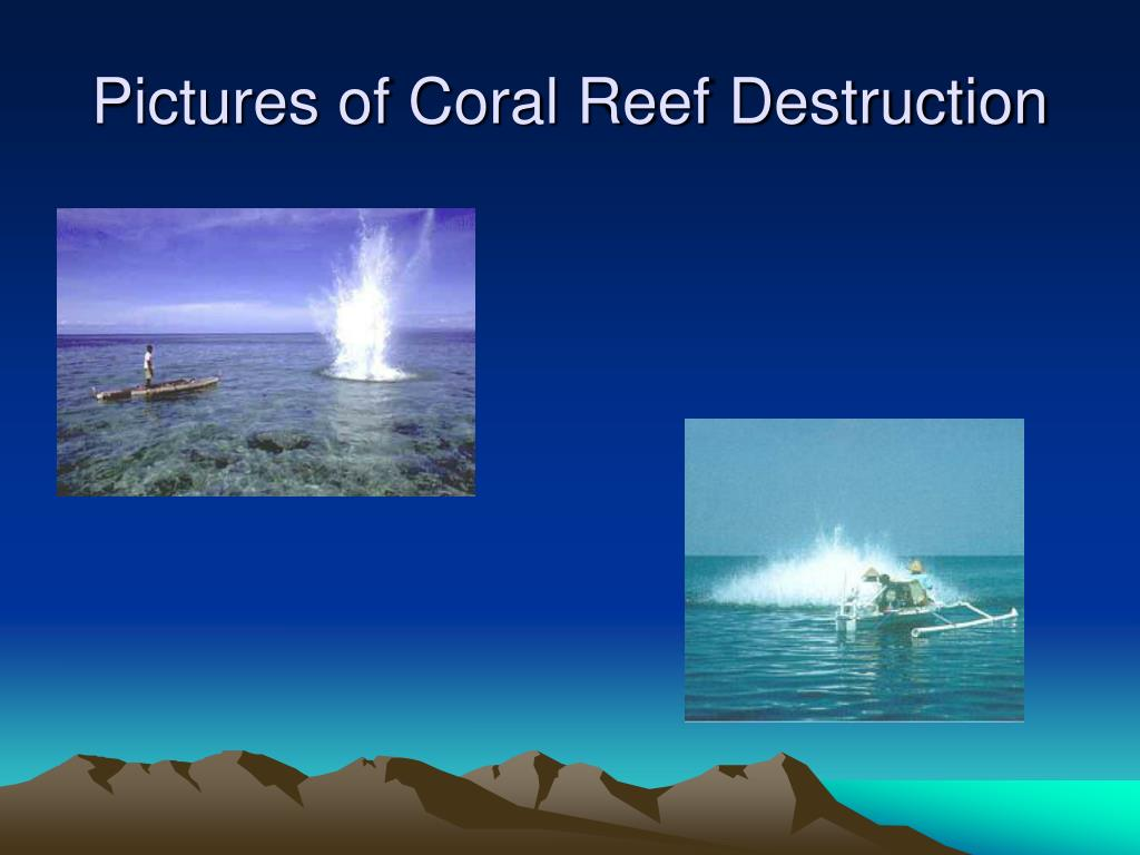 coral reef destruction Coral reefs, the journal of the international society for reef studies, presents multidisciplinary literature across the broad fields of reef studies.