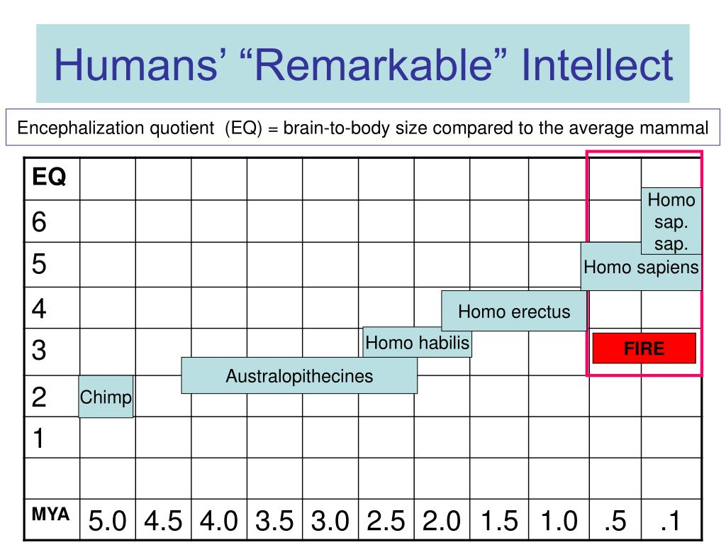 """Humans' """"Remarkable"""" Intellect"""