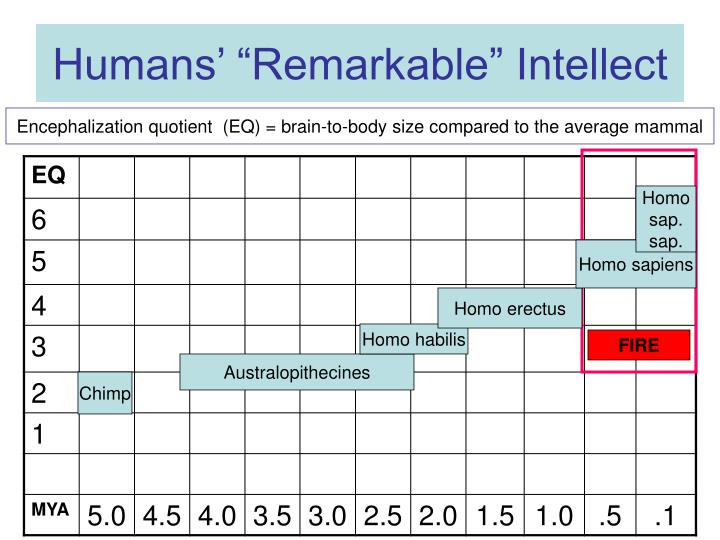 Humans remarkable intellect