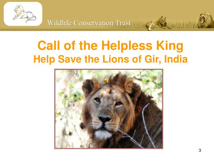 Call of the helpless king help save the lions of gir india
