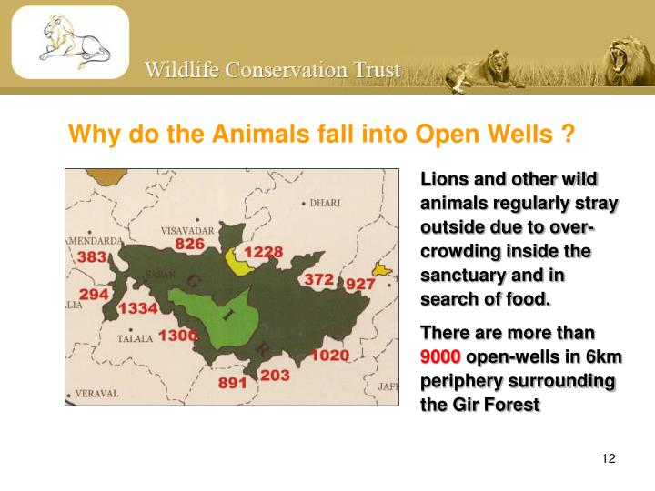 Why do the Animals fall into Open Wells ?