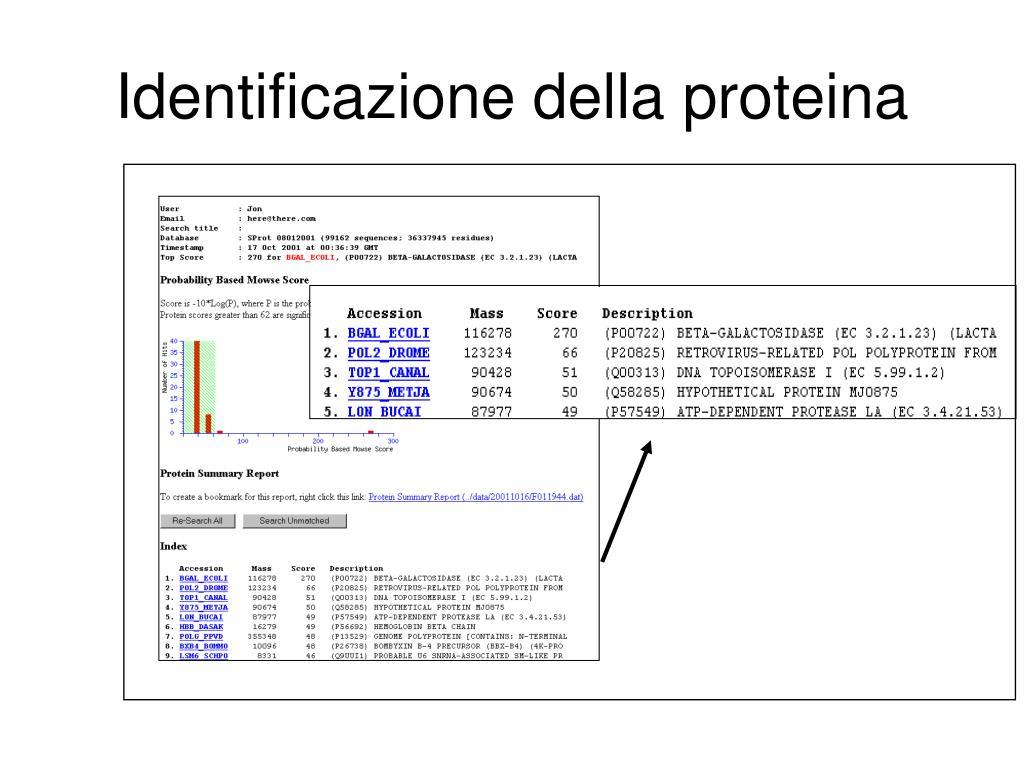 Identificazione della proteina