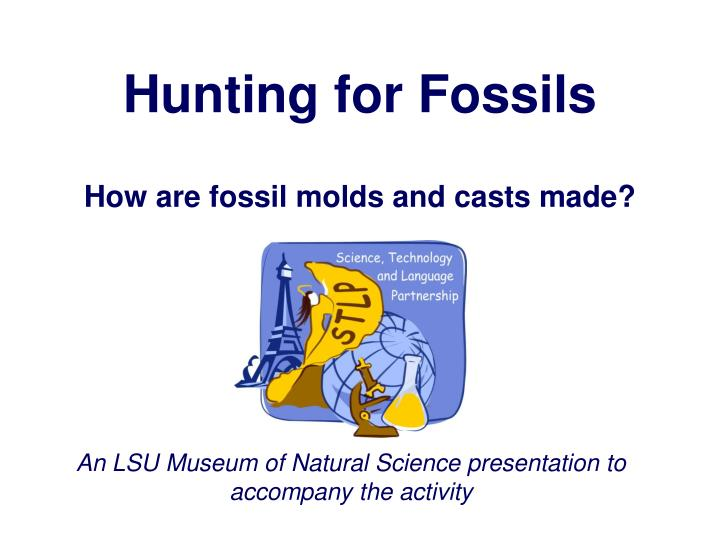 hunting for fossils n.