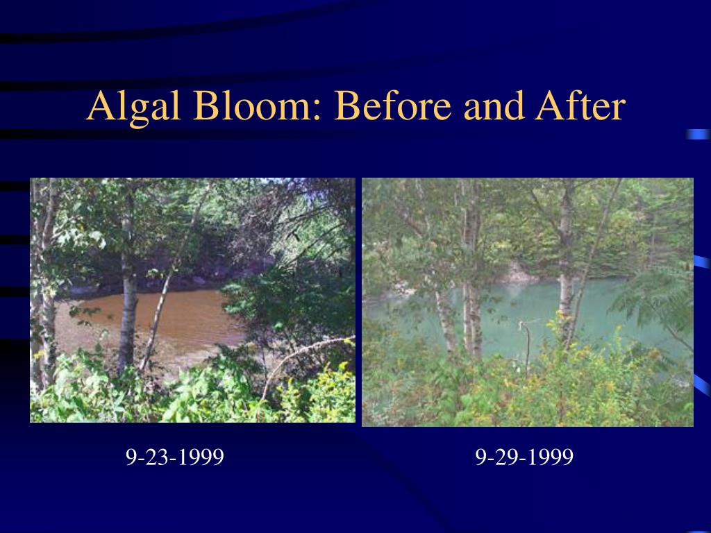Algal Bloom: Before and After