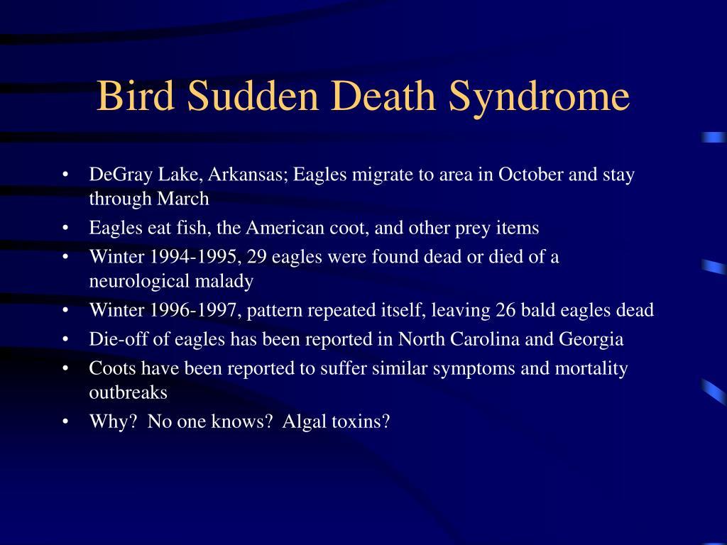 Bird Sudden Death Syndrome