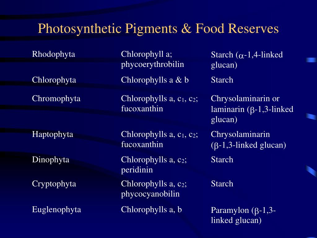 Photosynthetic Pigments & Food Reserves