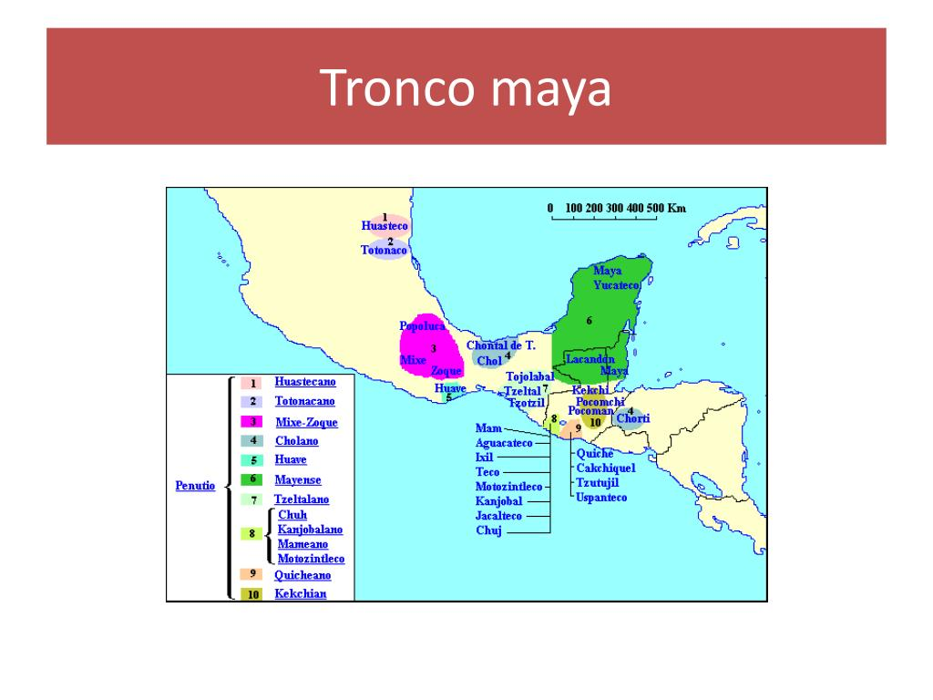 Tronco maya