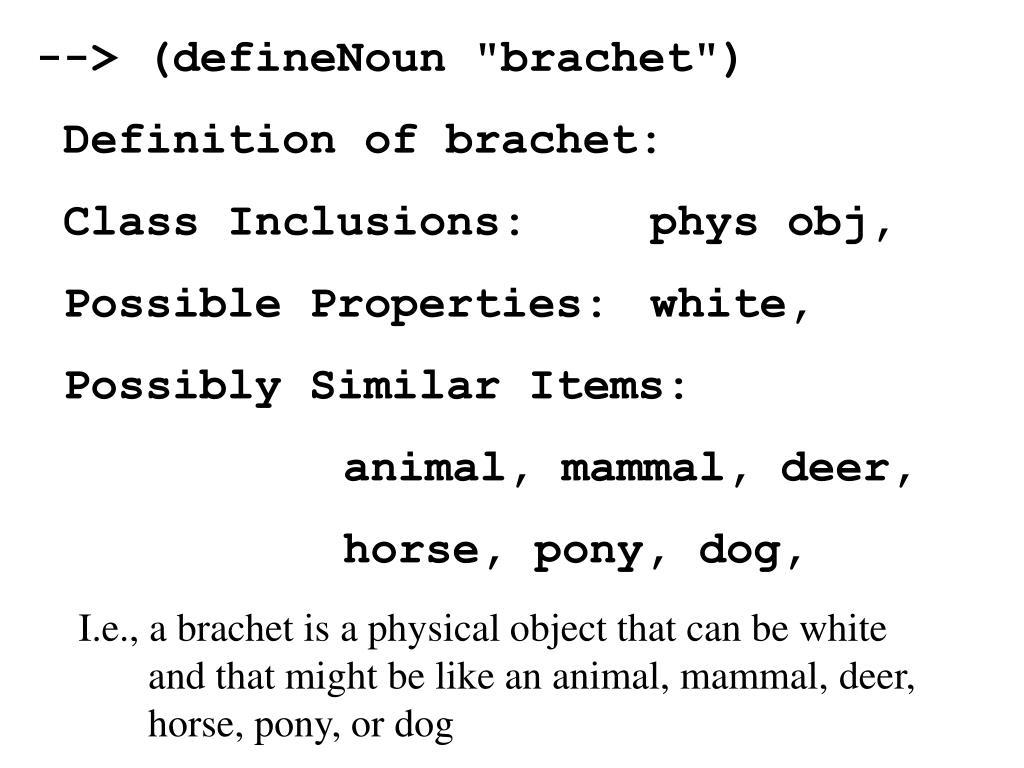 "--> (defineNoun ""brachet"")"