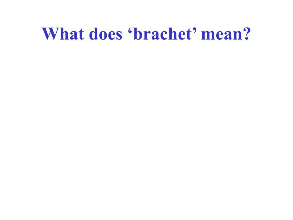 What does 'brachet' mean?