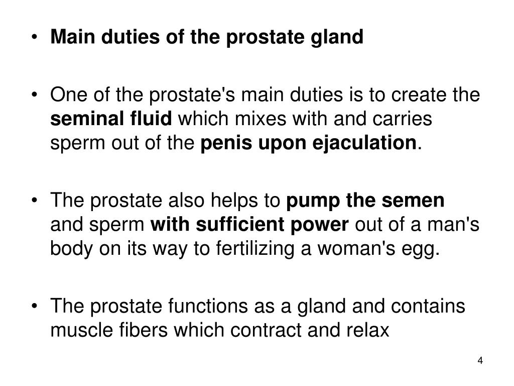 Main duties of the prostate gland
