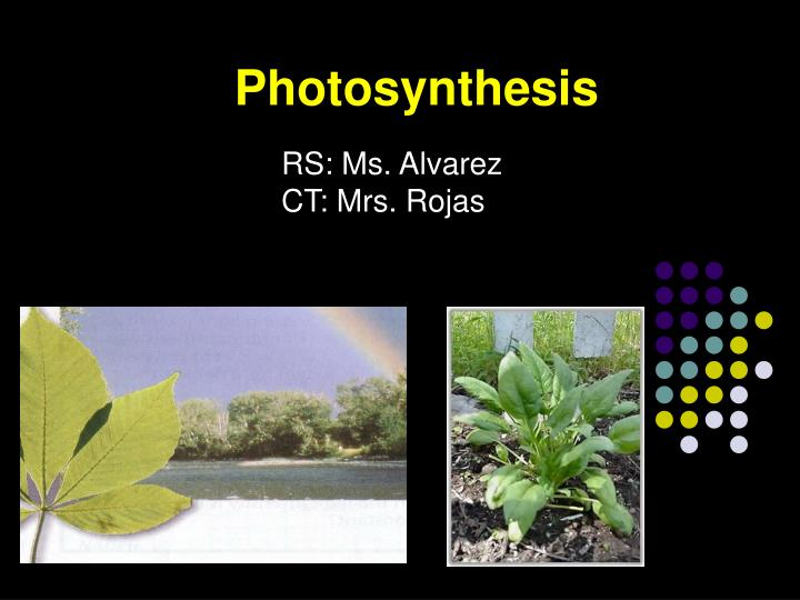 rotenone effects on phtosynthesis Photosynthesis is a complex natural process that takes place when plants convert sunlight into energy in addition to taking place in all plant species the process of photosynthesis to perform photosynthesis, plants require three elements in addition to sunlight, they need carbon dioxide and.