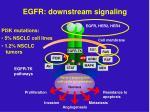 egfr downstream signaling17