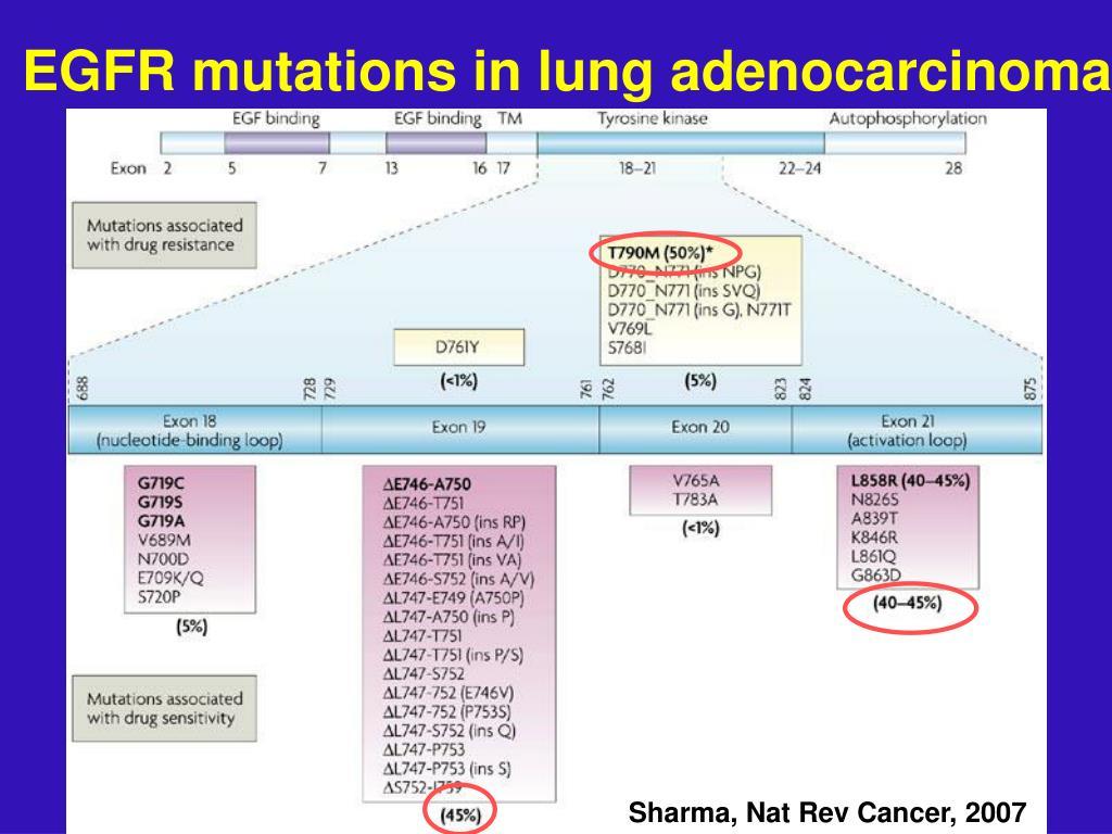 EGFR mutations in lung adenocarcinoma
