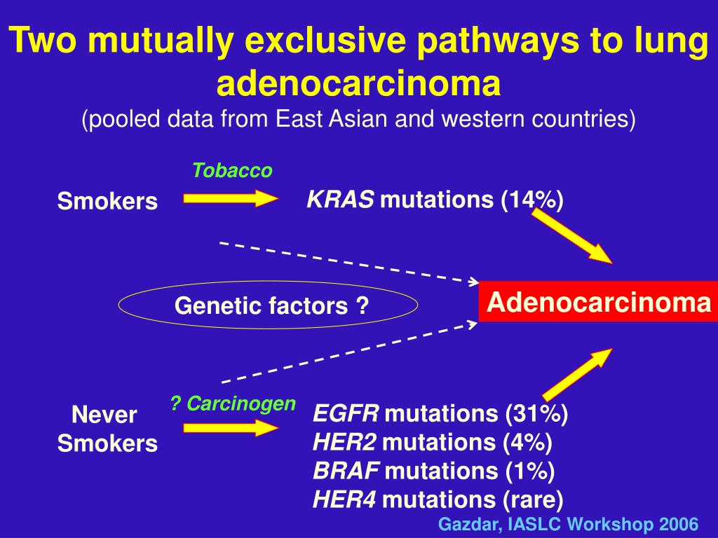 Two mutually exclusive pathways to lung adenocarcinoma
