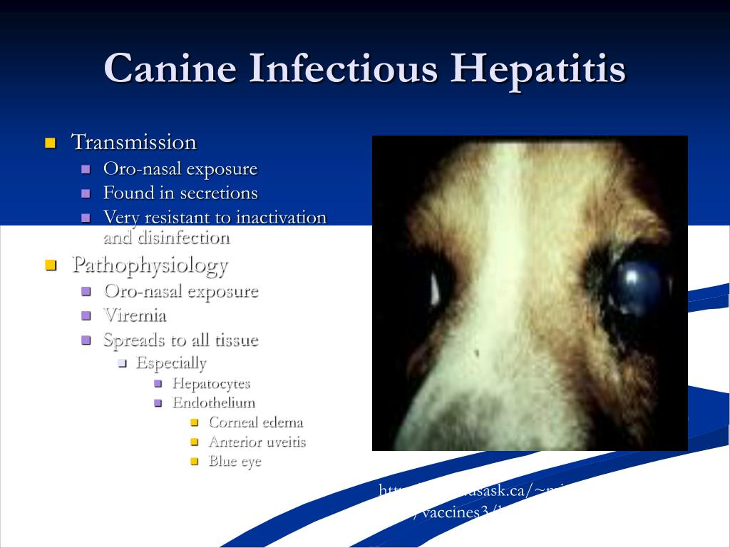 PPT - Small Animal and Caged Bird Medicine PowerPoint
