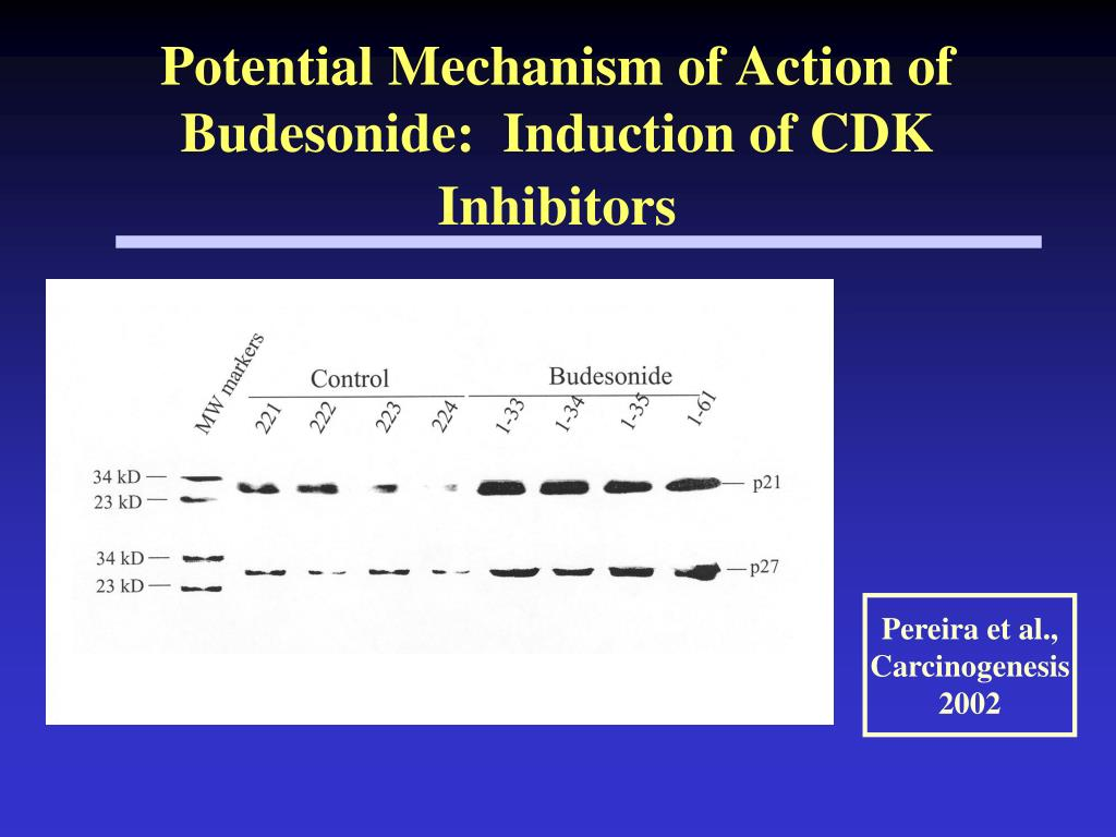 Potential Mechanism of Action of Budesonide:  Induction of CDK Inhibitors