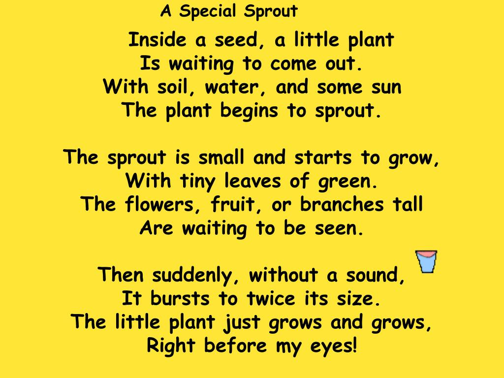 A Special Sprout