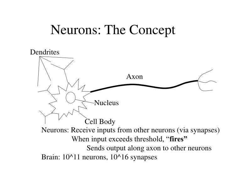 Neurons the concept