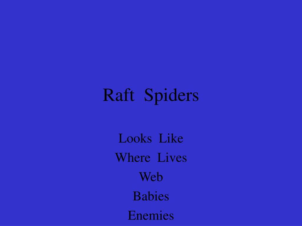 Raft  Spiders