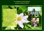 iv 1 fertilizers and soil nutrients5