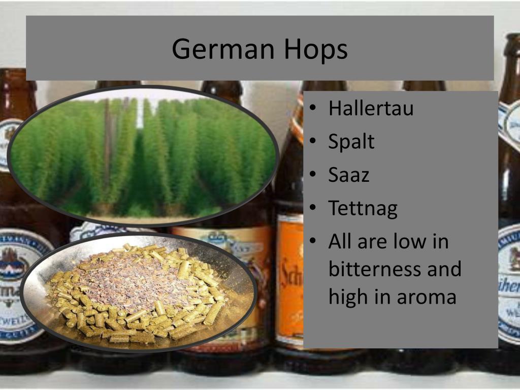 German Hops