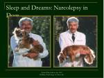 sleep and dreams narcolepsy in dogs