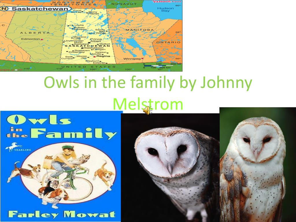owls in the family by johnny melstrom l.