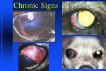 chronic signs