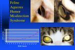 feline aqueous humor misdirection syndrome